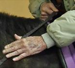 Senior Horse Therapy Barrington IL